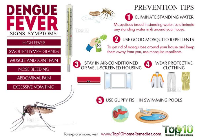 This image has an empty alt attribute; its file name is Dengue-Fever-Sri-Lanka.jpg